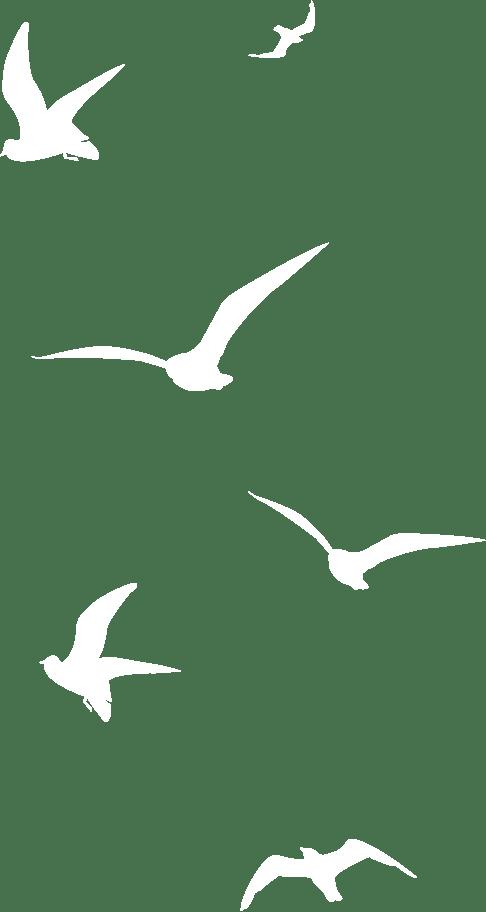 木々に集う鳥の画像